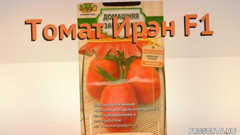 ирэн f1 семена, семена, семена томата, семена томата ирэн f1, томат обыкновенный ирэн f1 как сажать, томат обыкновенный ирэн f1 обзор как сажать, томат обыкновенный ирэн f1 обзор, томат ирэн f1 обзор как сажать
