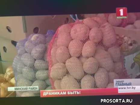 корнеплод, драники, бульба, белорусский картофель, урожай, картошка, картофель, аграрии
