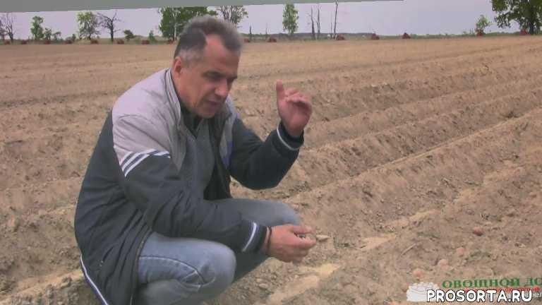 Выращивание картофеля. Междурядья