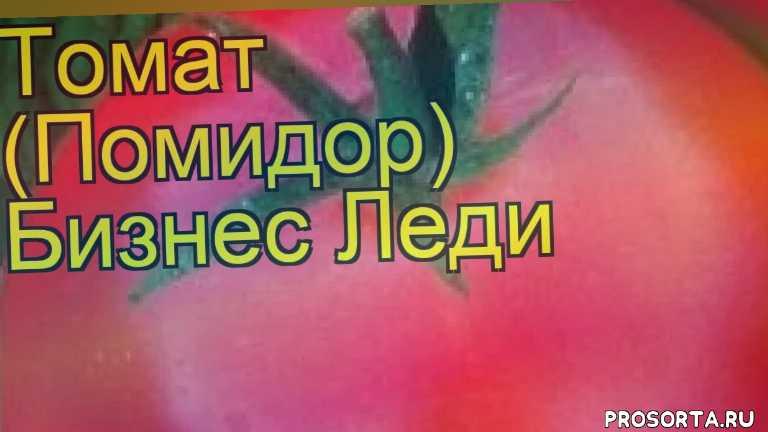 томат обыкновенный бизнес леди уход, томат обыкновенный бизнес леди посадка, томат обыкновенный бизнес леди отзывы, где купить семена томат обыкновенный бизнес леди, купить семена томата бизнес леди, семена томат обыкновенный бизнес леди, видео томат обыкновенный бизнес леди, томат обыкновенный бизнес леди описание характеристик