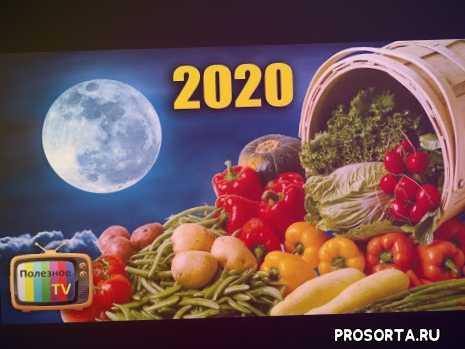 2020, посевной календарь 2020, лунный календарь 2020, рассада, семена, когда садить помидоры, когда садить огурцы, когда сеять семена