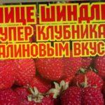 /Супер ягода, с малиновым вкусом, /клубника Мице Шиндлер! /