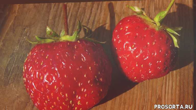 сад огород клубника, какую клубнику, клубника на даче, садоводство, выращивание клубники, клубника для дачи, вкусная ягода, ягода
