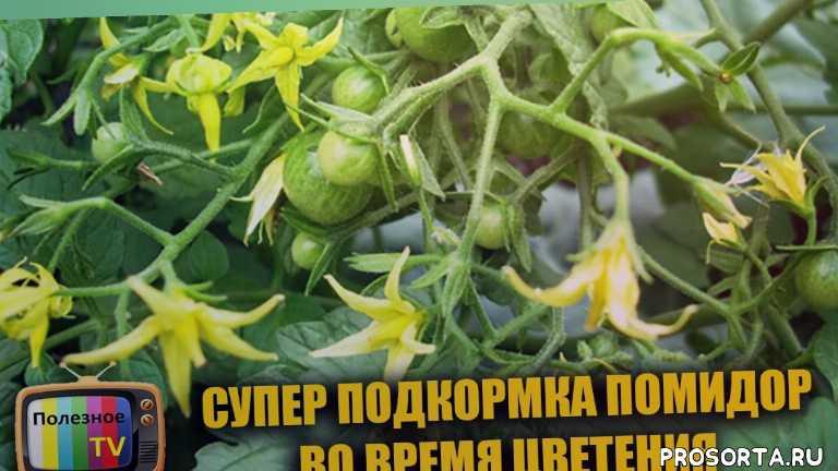 борная кислота для помидор, выращивание помидор, подкормка помидор, помидор, удобрение, удобрения для томатов, супер способ, борная кислота для растений
