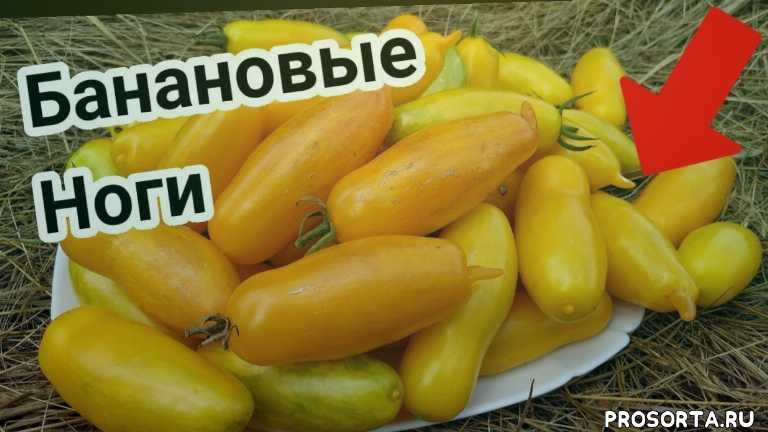 обзор семян, урожай, рассада, какие томаты лучше посадить, уход за томатами, семена, обзор сортов, лучшие помидоры