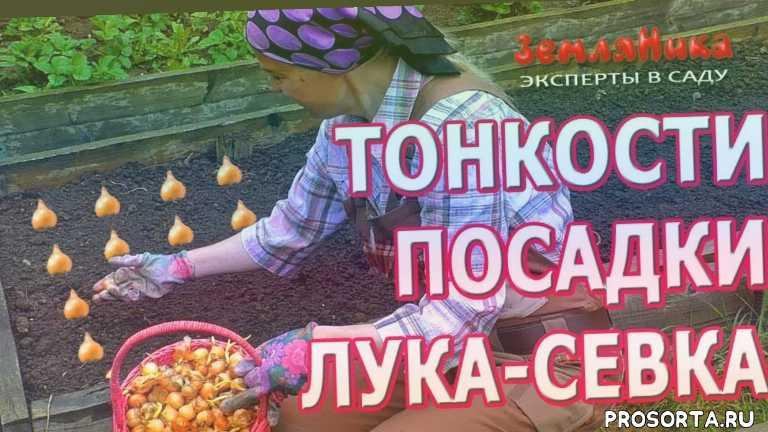 купить лук-севок, seedspost.ru, ольга воронова, воронова, эксперты в саду, земляника эксперты всаду, канал земляника, земляника