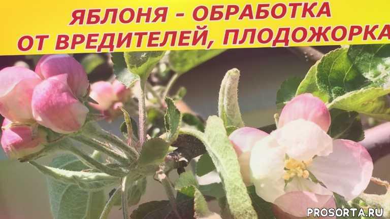 болезни, от вредителелей, обработка, плодожорка, яблоня, смородина, кусты, деревья