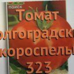 Томат обыкновенный Волгоградский скороспелый 323 ? обзор: как сажать, семена томата