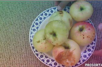 забытые сорта, старые сорта яблок, старые сорта, забытый сорт яблок, сорт яблок, старый сорт