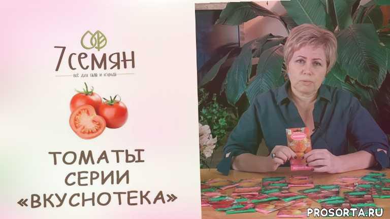 томат медовые росы, томат румяный шар, томат малиновый рассвет, томат румянец, томат черная лакомка, томат зефир в шоколаде, томат бизон оранжевый, томат бизон желтый