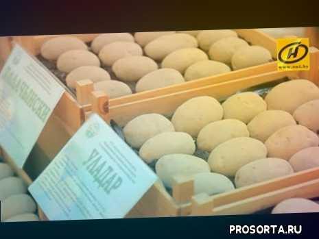 утро, навіны, главные новости, tv onlain, продукты, картофель, необычно, novosti belarus