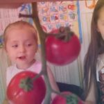 """Вкусовые качества томата """"Биг Биф, Президент, Аксиома, Спрут черри, Бычье сердце"""" (ч.2)"""
