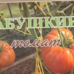 ? Томат БАБУШКИНО | Хороший вкус | Болезнеустойчивый | Вариант выращивания в 2 стебля