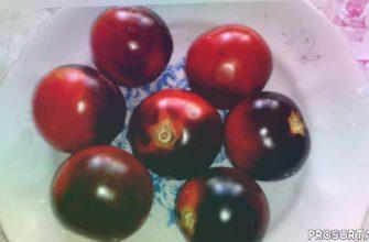 вкусные синеплодные томаты, синеплодныетоматы, томаты с антоцианом, томатылечебные, томат сиреневый туман, томатблево20, томат блеве р 20, #томатнаконсервацию