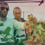 Шикарный летний сорт Польской  малины СОКОЛИЦА. Осенний урожай!