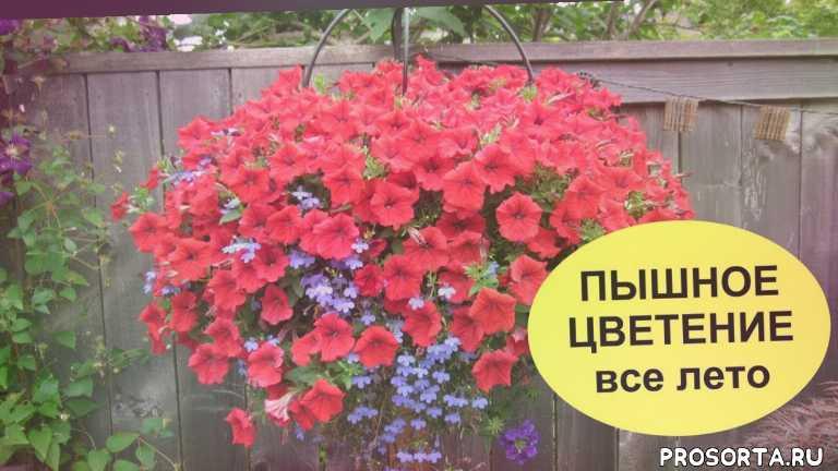 комнатный цветок, комнатный растение, красота, сельское хозяйство, деревенская жизнь, сад и дача, сделай сам, elena matveeva