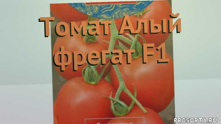 семена, томат обыкновенный алый фрегат f1 обзор как сажать, томат обыкновенный алый фрегат f1 обзор, томат алый фрегат f1 обзор как сажать, травы, обыкновенный томат алый фрегат f1 обзор как сажать, обыкновенный томат алый фрегат f1 обзор, обыкновенный томат