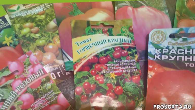 вкусныепомидорысорта устойчивыесортатоматов сладкиепомидорысорта мясистыепомидорысорта
