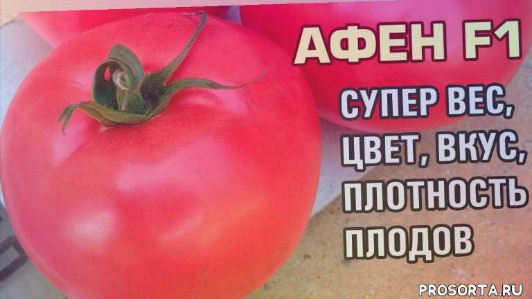 вирус желтой курчавости, tylcv, плоды помидора, плоды томата, плод помидоров, плод томатов, плотность, вес