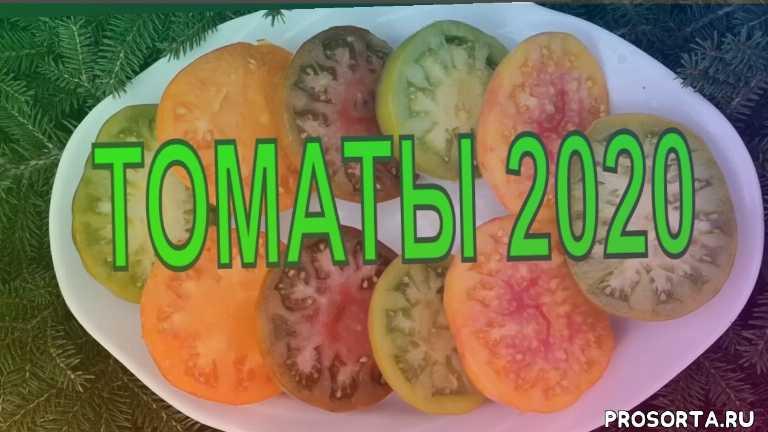 удивительные сорта томатов, эксклюзивные сорта томатов, самые урожайные сорта томатов, обзор семян томатов, посев семян томатов, лучшие томаты 2020 года, когда сеять томаты, сроки посева томатов