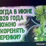 Когда нарезать и укоренять черенки цветочных, декоративных растений в июне 2020 года? Агропрогноз
