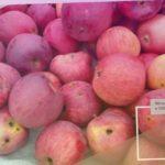 Яблоня Беркутовское - обзор сорта