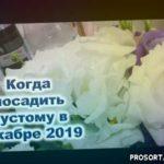 """Эустома, примула, пеларгония... Первая """"семерка"""" цветов начинает в декабре 2020 года сезон 2020"""