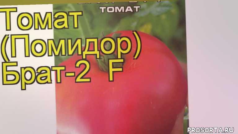 томат овощной брат-2 какие растения сажают рядом, томат овощной брат-2 посадка и уход, томат овощной брат-2 уход, томат овощной брат-2 посадка, томат овощной брат-2 отзывы, где купить семена томат овощной брат-2, купить семена томата брат-2, семена томат овощной брат-2