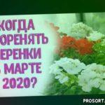Укореняем черенки в марте 2020 года. Лучшие дни для нарезки черенков и укоренения садовых растений