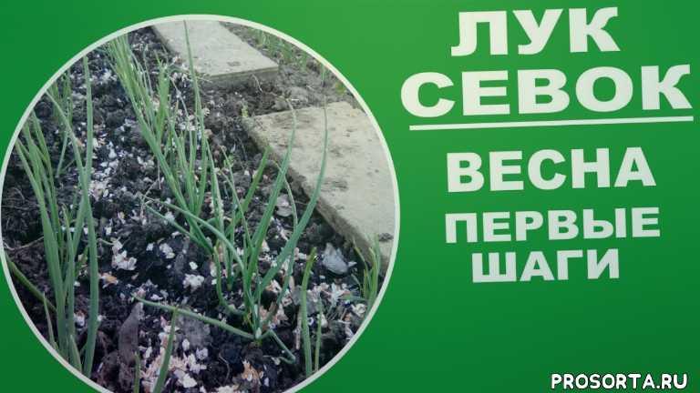 любимая усадьба, полезные советы, как правильно, урожайный огород, как сажать, агротехника, в средней полосе, в подмосковье