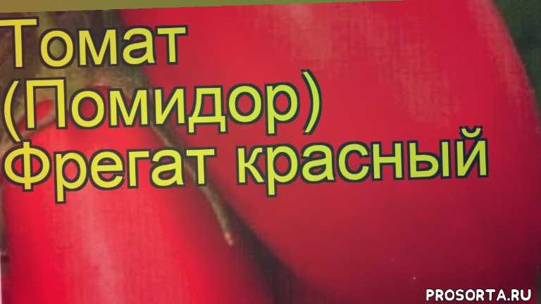 томат обыкновенный фрегат посадка и уход, томат обыкновенный фрегат уход, томат обыкновенный фрегат посадка, томат обыкновенный фрегат отзывы, где купить семена томат обыкновенный фрегат, купить семена томата фрегат, семена томат обыкновенный фрегат, видео томат обыкновенный фрегат