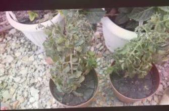 моя дача., сельское хозяйство, сад и огород, мой сад, мои цветы, частный дом, дом, сад