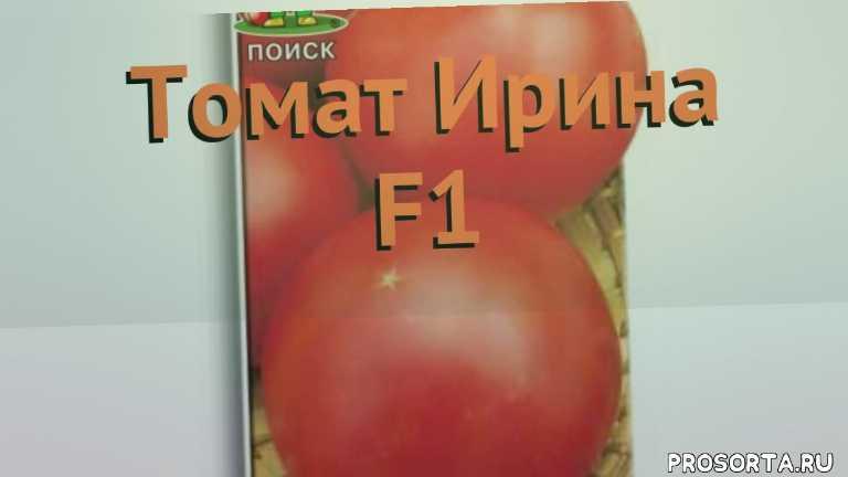 семена, семена томата, семена томата ирина f1, томат обыкновенный ирина f1 как сажать, томат обыкновенный ирина f1 обзор как сажать, томат обыкновенный ирина f1 обзор, томат ирина f1 обзор как сажать, травы