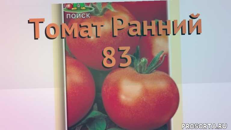 семена, семена томата ранний 83, томат обыкновенный ранний 83 как сажать, томат обыкновенный ранний 83 обзор как сажать, томат обыкновенный ранний 83 обзор, томат ранний 83 обзор как сажать, травы, обыкновенный томат ранний 83 обзор как сажать