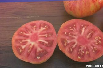 Томат Винтейдж Вайн. Vintage Wine tomato