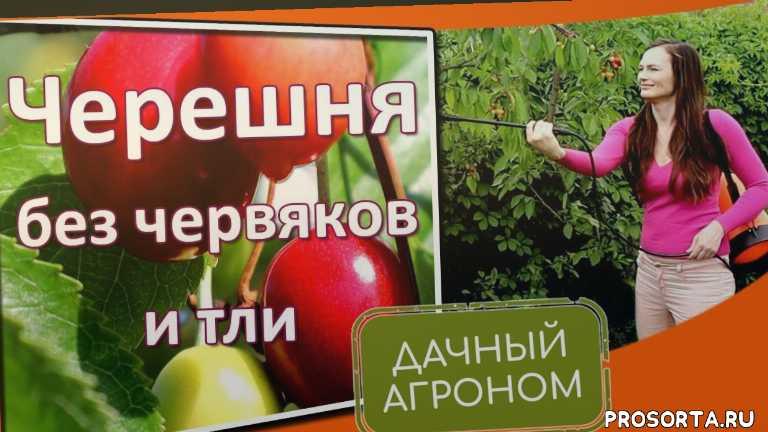 средства защиты растений, биопрепараты для защиты растений, фитоверм, актарофит, актоцид, актофит, лепидоцид, клуб органического земледелия