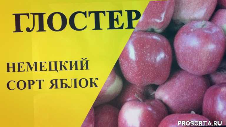 парша яблони лечение, яблоня чемпион описание, яблоня чемпион, парша яблони, гала маст, яблоки гала, флорина, голден рейндерс