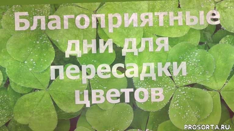 пересадка цветов, выращивание комнатных растений, выращивание цветов, цветы, пересадка, справочник комнатных растений, пересадка растений, черенкование