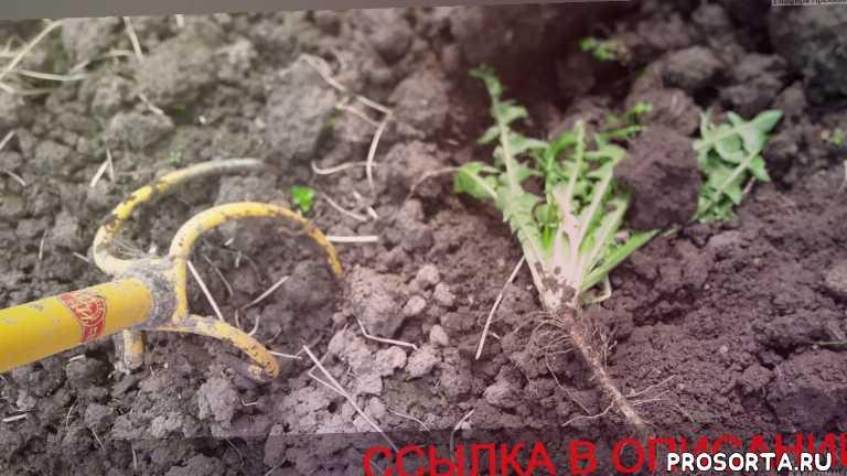 новый культиватор, купить торнадо садовый, где купить торнадо, ручной культиватор торнадо цена, торнадо культиватор купить цена, когда сажать картошку в 2018, ручной культиватор торнадо купить, копать землю