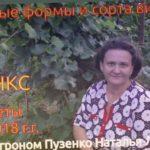 Виноград Сфинкс- очень раннего срока созревания, участок Пузенко Натальи Лариасовны