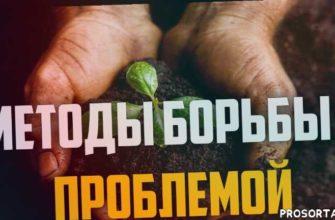 умное хозяйство, умное хозяйство, umhoz, рассада по-московски, рассада, рассада видео, рассада из семян, рассада цветов