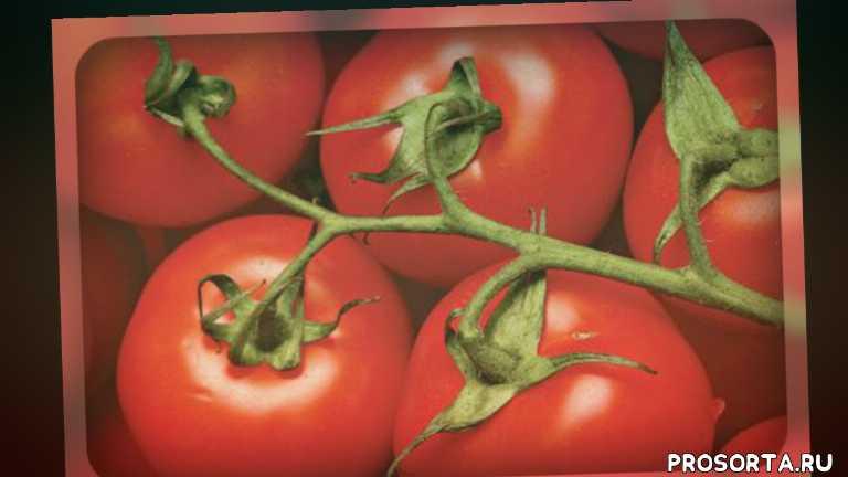 дачникам, огоородникам, огород, овощи, семена томатов, томаты, классные сорта, хорошие сорта
