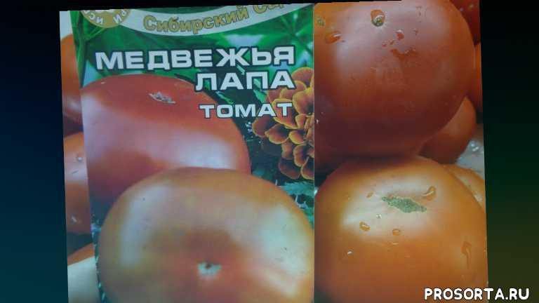 томат медвежья лапа., самые урожайные томаты, сад огород, томаты, ольга чернова