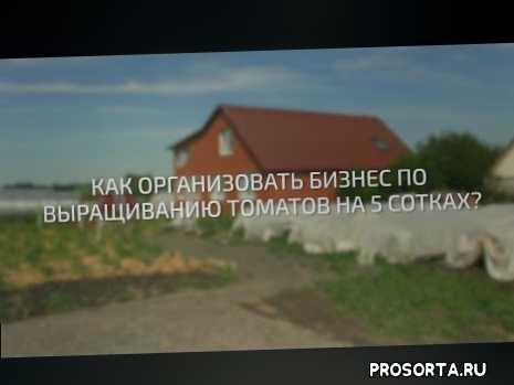 мичурин-томаты, объединяйтесь, люди, россия, патриотизм, нравственность, единство, любовь