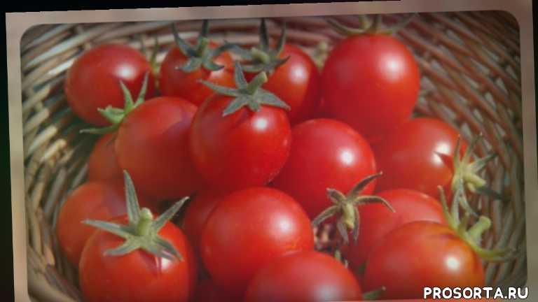 семена овощей, овощи, семена помидоров, семена томатов, супер сорта томатов, хорошие сорта томатов, классные сорта томатов, сорта томатов