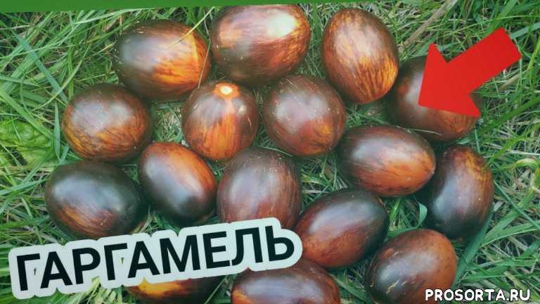 лучшие семена, семена, семена томатов, экзотические томаты, экзоты, коллекционые томаты, лучшие томаты, алена шатковская