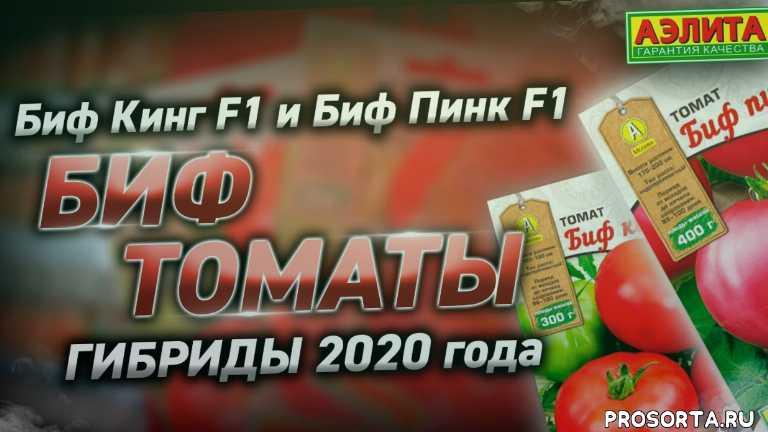 биф томаты, томат биг биф видео, томат биг биф, агрофирма аэлита каталог, агрофирма аэлита семена томатов, агрофирма аэлита биф томаты, томат биф кинг f1, томат биф пинк бренди