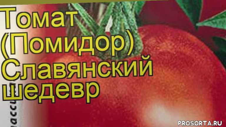 томат славянский шедевр посадка и уход, томат славянский шедевр уход, томат славянский шедевр посадка, томат славянский шедевр отзывы, где купить семена томат славянский шедевр, купить семена томата славянский шедевр, семена томат славянский шедевр, видео томат славянский шедевр