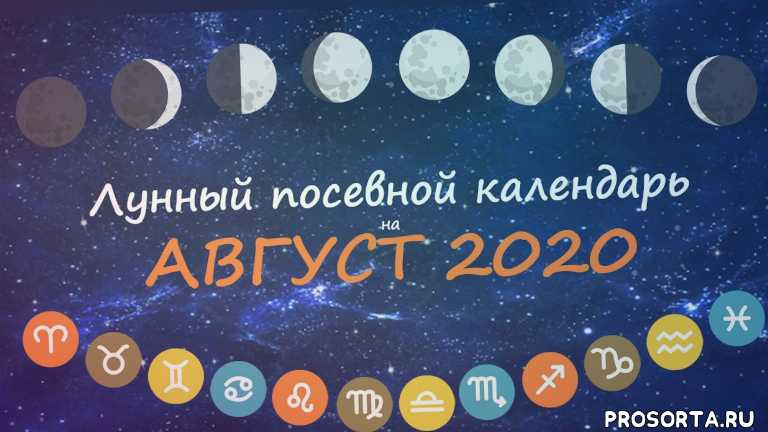 календарь садовода, август 2020, посевной календарь, календарь огородника, лунный календарь садовода