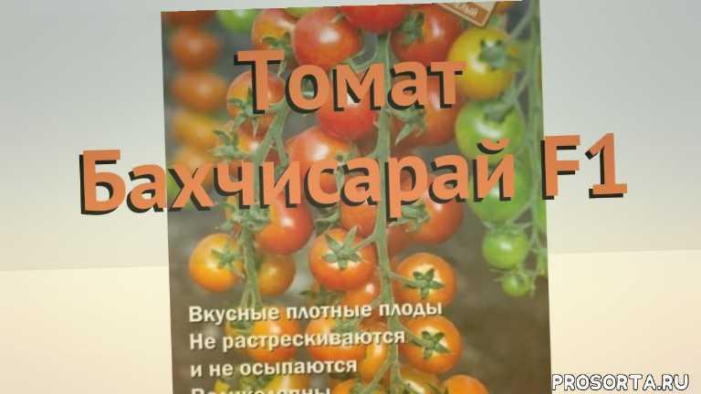 семена томата, томат обыкновенный бахчисарай f1 обзор как сажать, томат обыкновенный бахчисарай f1 обзор, томат бахчисарай f1 обзор как сажать, травы, обыкновенный томат бахчисарай f1 обзор как сажать, обыкновенный томат бахчисарай f1 обзор, обыкновенный томат